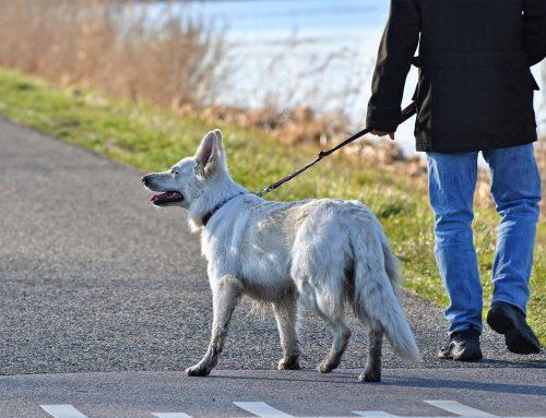 """Presseinformation: Dachverband """"Jagd Österreich"""" appelliert: Hunde an die Leine!"""