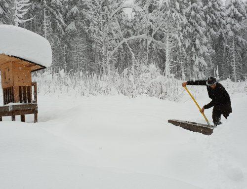 Tiroler Jägerverband: Dramatische Lage für Wildtiere