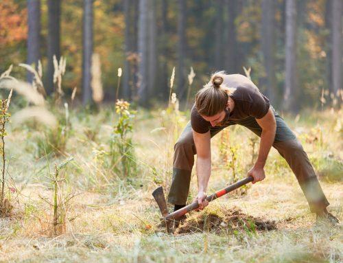 NÖ Jagdverband: Jägerinnen und Jäger pflanzten im Coronajahr rund 31.000 Bäume & Sträucher